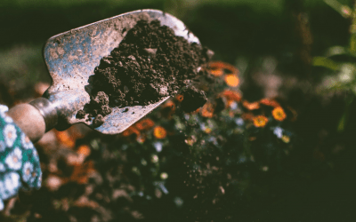 The Best Worm Compost Bin – Buying Guide 2019
