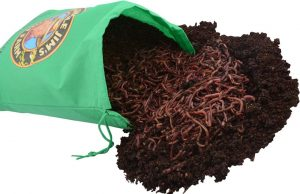 Uncle Jim's worm farm bag of red wigglers