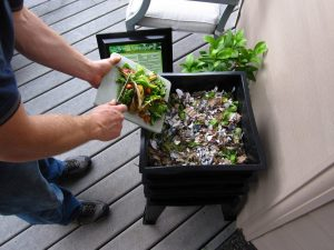Filling the Worm Factory 360 with kitchen scraps